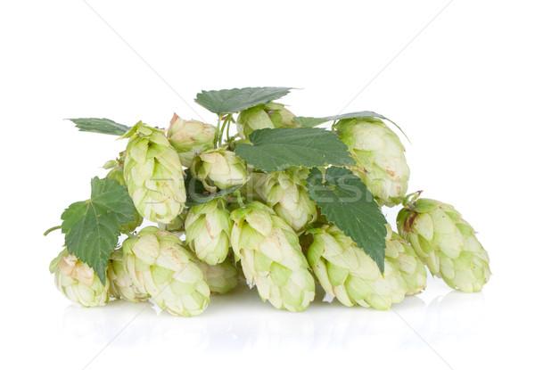 Blossoming hop with leaves Stock photo © karandaev