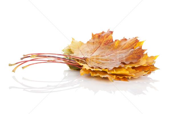 Színes ősz juhar levelek izolált fehér Stock fotó © karandaev