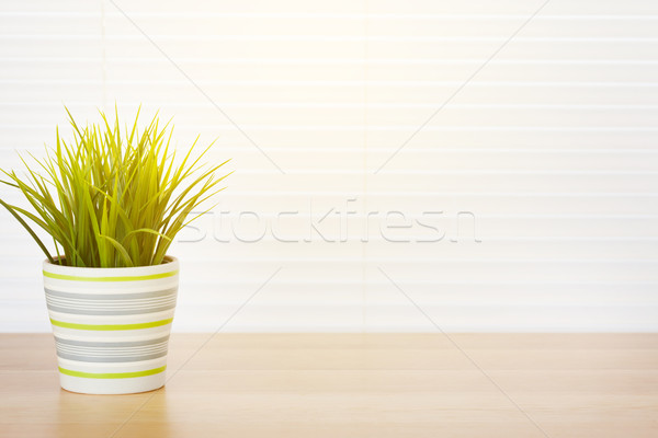 Office workplace with potted plant Stock photo © karandaev