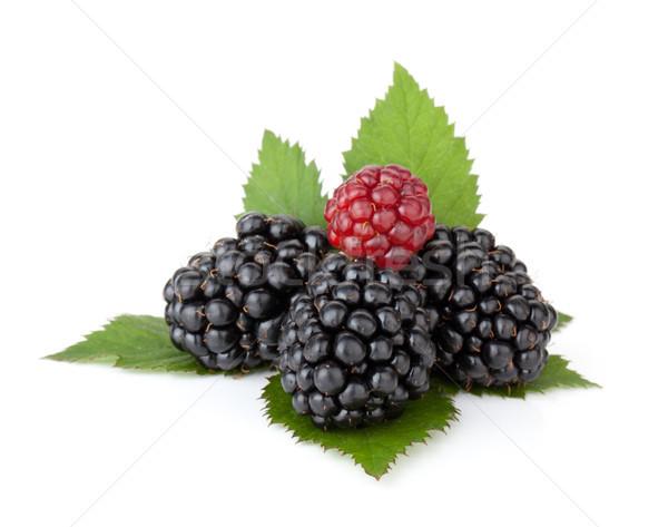 Ripe blackberry with leaves Stock photo © karandaev
