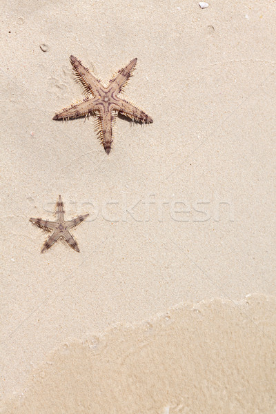 Seastars on the sand of the beach Stock photo © karandaev
