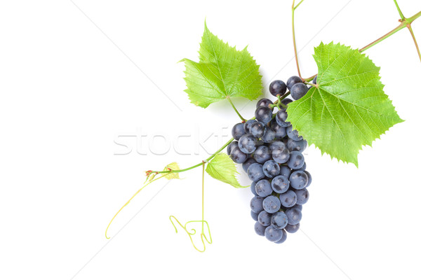 Bunch of red grapes Stock photo © karandaev