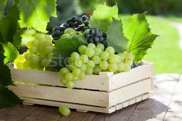 Videira monte branco uvas caixa Foto stock © karandaev