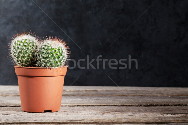 Kaktusz sötét fal fa asztal kilátás copy space Stock fotó © karandaev