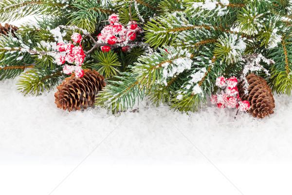Christmas fir tree branch with holly berry Stock photo © karandaev