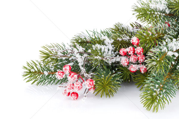 Christmas fir tree branch with holly berry Stock photo © karandaev