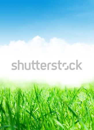 Absztrakt napos tavasz fű kamilla virágok Stock fotó © karandaev