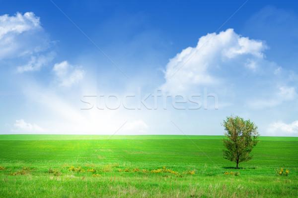 Yeşil ot alan mavi gökyüzü ağaç çim doğa Stok fotoğraf © karandaev