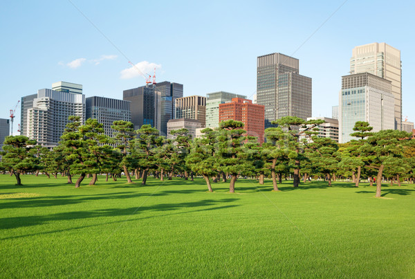 Pine trees park in front of skyscrapers Stock photo © karandaev