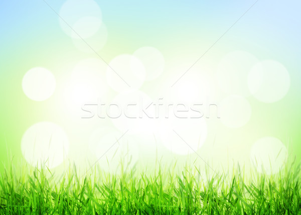 Summer background with grass and sunny bokeh Stock photo © karandaev