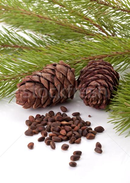 Siberian pine nuts and needles branch Stock photo © karandaev