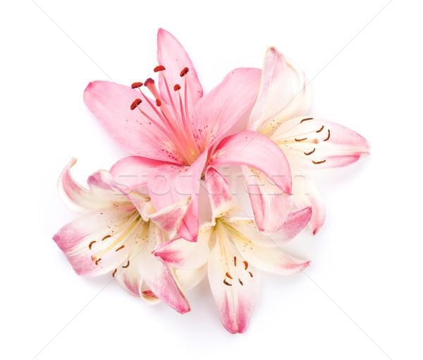 Roze lelie bloemen geïsoleerd ontwerp schoonheid Stockfoto © karandaev