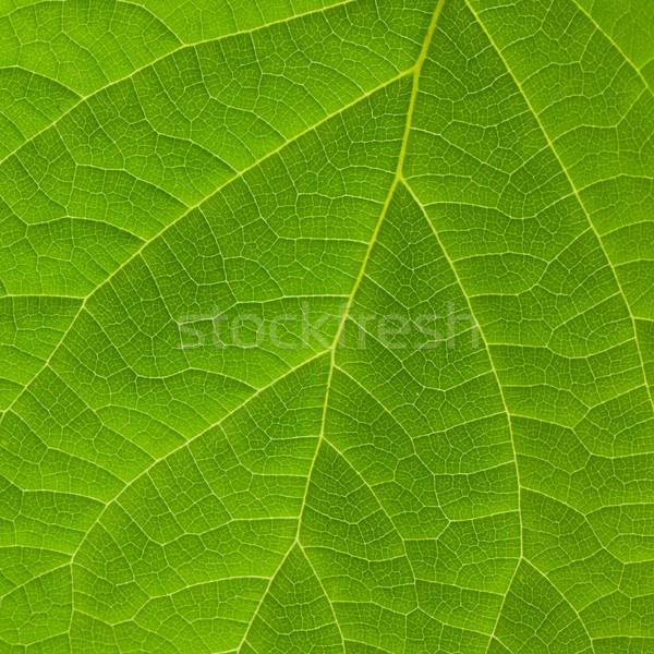 Textuur groen blad macro natuur schoonheid zomer Stockfoto © karandaev