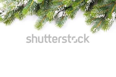 Christmas tree branch with snow Stock photo © karandaev