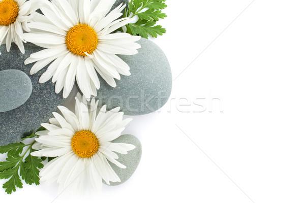 Margarida camomila flores flor mar pedras Foto stock © karandaev