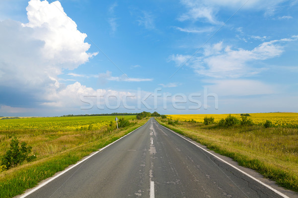 Road through the yellow sunflower field Stock photo © karandaev