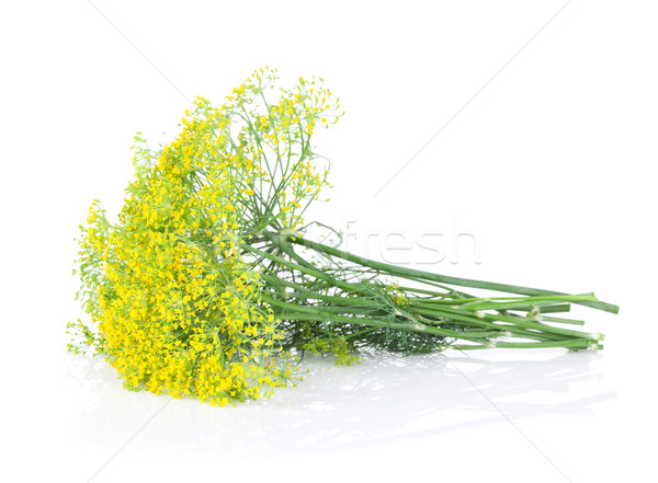 Stock photo: Fresh garden herbs. Blossom dill