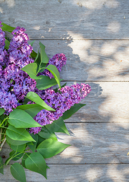 Purple lilac flowers on garden table Stock photo © karandaev