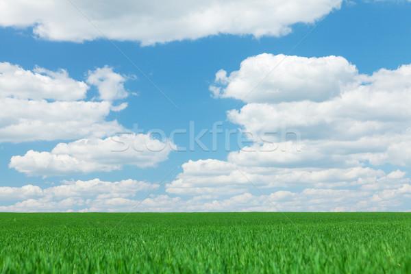 Green grass field, blue sky with clouds Stock photo © karandaev