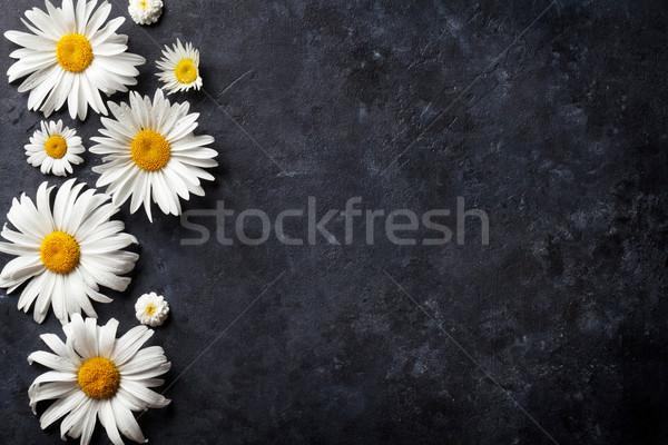 Jardin camomille fleurs pierre table fond Photo stock © karandaev