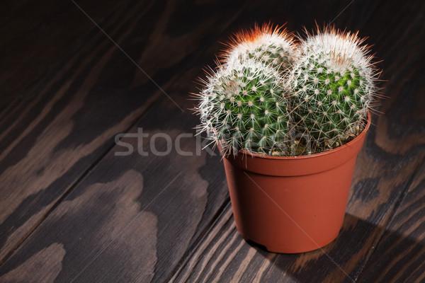 Kaktusz fa asztal kilátás copy space virág otthon Stock fotó © karandaev