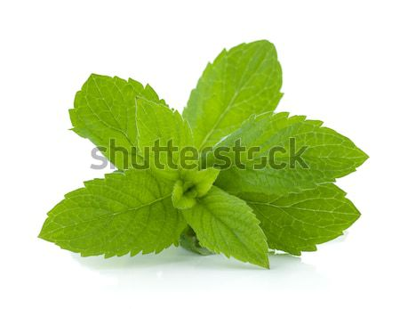 Mint leaves Stock photo © karandaev