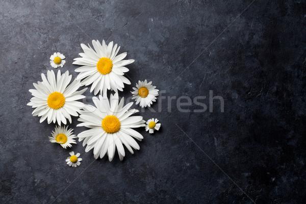 Garden chamomile flowers over stone Stock photo © karandaev
