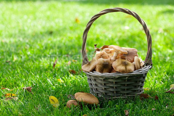 Autumn mushrooms Stock photo © karandaev