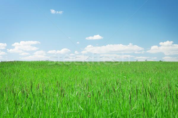 зеленая трава области Blue Sky облака горизонте небе Сток-фото © karandaev