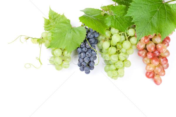 красный Purple белый виноград листьев Сток-фото © karandaev