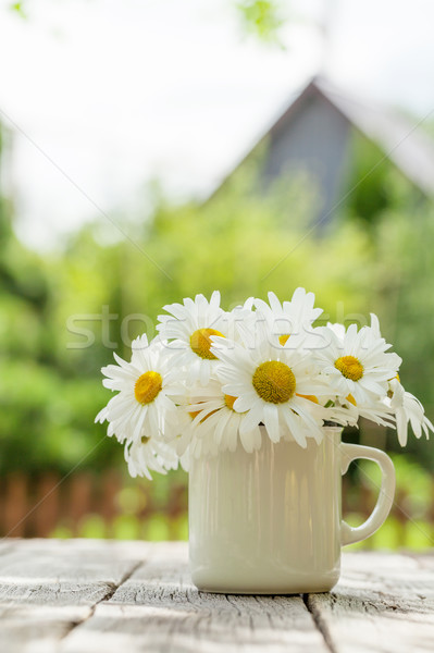 Daisy kamille bloemen houten tuin tabel Stockfoto © karandaev