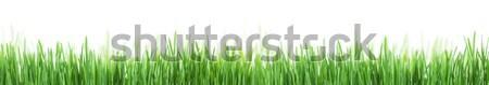 Abstract sunny grass texture Stock photo © karandaev