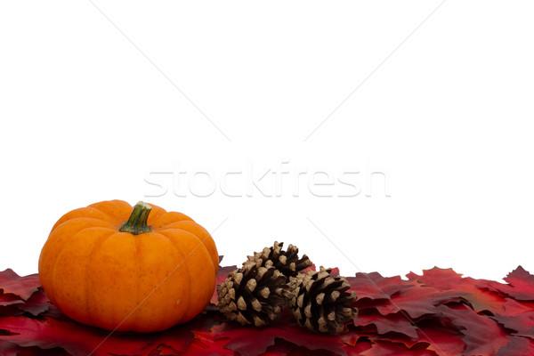 Otono tiempo rojo hojas de otoño calabaza pino Foto stock © karenr