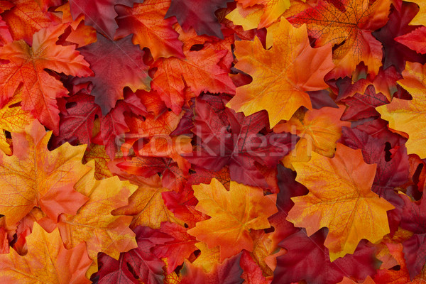 Hojas de otoño rojo naranja otono caída cosecha Foto stock © karenr
