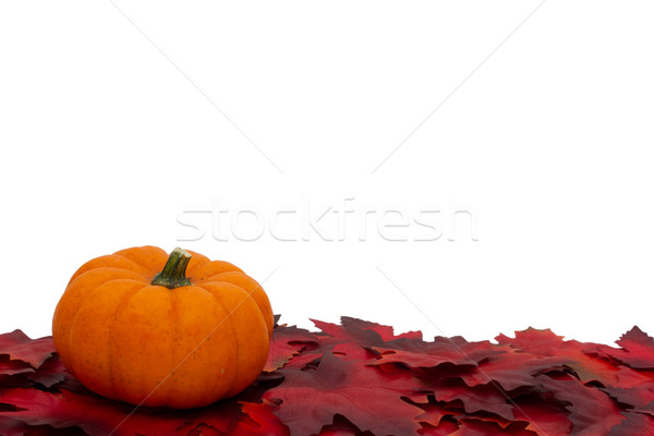 Autumn Time Background Stock photo © karenr