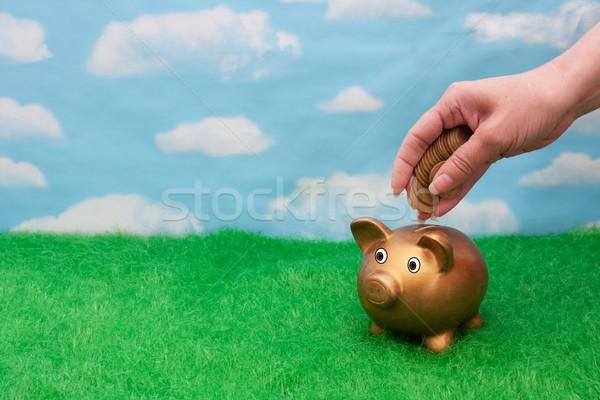 Risparmio conto oro salvadanaio erba cielo Foto d'archivio © karenr