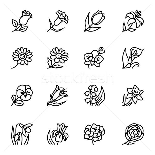 Virágok skicc vektor ikon gyűjtemény minta ikonok Stock fotó © karetniy