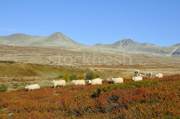 Parc Norvège automne nature paysage espace Photo stock © karin59