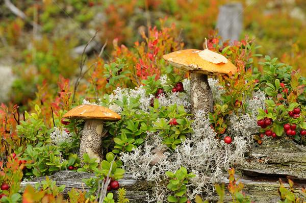 Champignons champignons automne feuille automne Photo stock © karin59