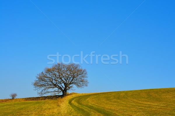 Arbre printemps vieux prairie herbe paysage Photo stock © karin59