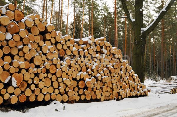 Bois de chauffage prêt hiver arbre travaux supérieurs Photo stock © karin59