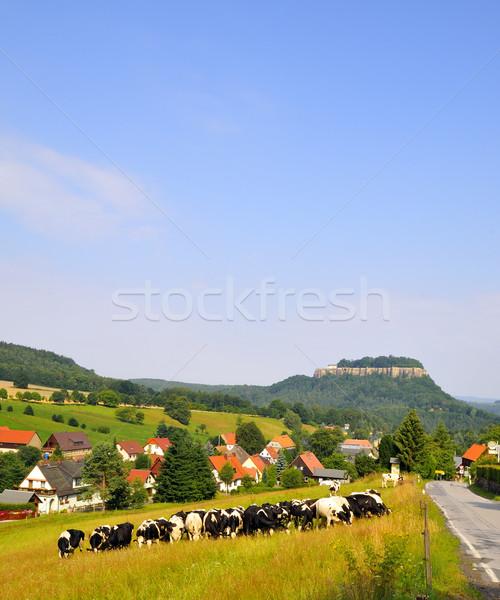 Vue roi pierre Suisse forêt été Photo stock © karin59