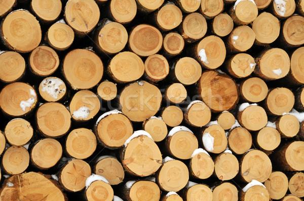 Yakacak odun hazır kış ağaç çalışmak kıdemli Stok fotoğraf © karin59