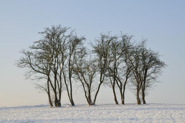 Hiver arbres neige Photo stock © karin59