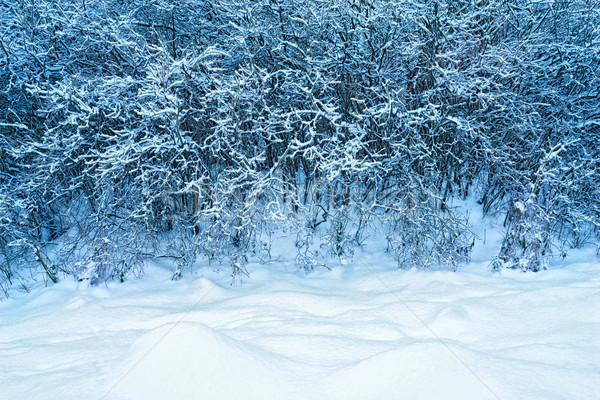 Snow-covered trees Stock photo © Karpenkovdenis