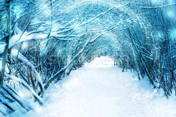 パス 冬 森林 空 自然 風景 ストックフォト © Karpenkovdenis