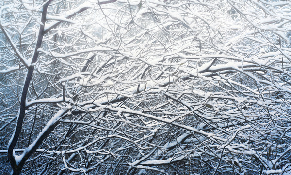 Snow-covered  branch of the trees Stock photo © Karpenkovdenis