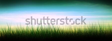 Tramonto silhouette erba cielo panorama design Foto d'archivio © kash76