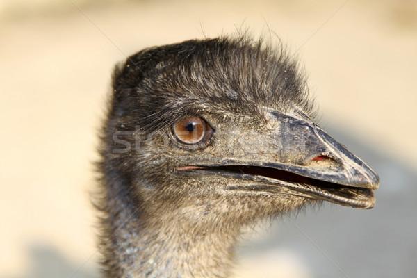 Struś głowie shot twarz ptaków Zdjęcia stock © kawing921