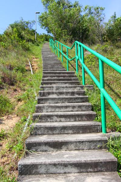 Turystyka schody górskich drzewo trawy lasu Zdjęcia stock © kawing921